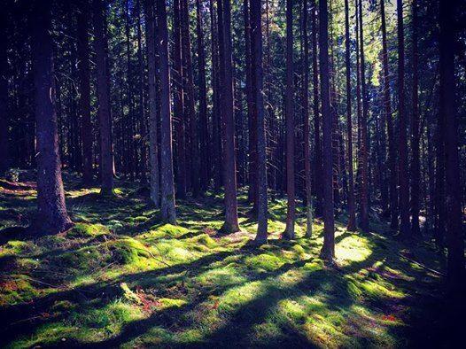 Alt du ikke visste om skogen