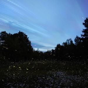 Fireflies Night Trek to Prabalmachi on 16th 17th June 2018