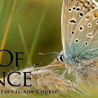 Art of Silence Course