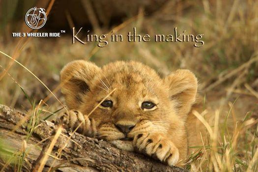 T3WR - Gir Lion Safari