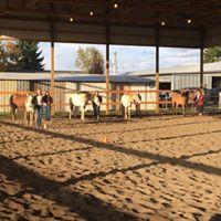 Gaming Horse Pre Fair