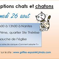 Matine dadoptions chats et chatons abandonns