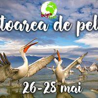 Vanatoarea de pelicani in Delta Dunarii