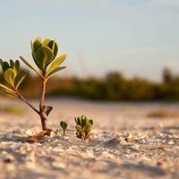 Clean Mangrove Campaign