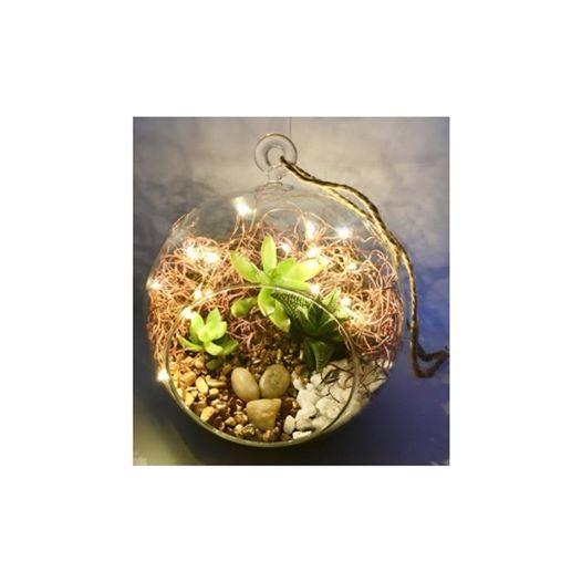 Plant Nite Succulent Terrarium W Fairy Lights Pearl St 11 11 At