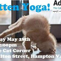 Kitten Yoga SOLD OUT