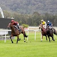 Gosford Race Day