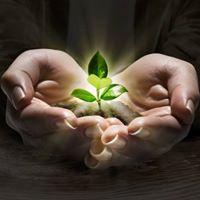 Ayurveda and Healthy Living Balancing Fall Energy