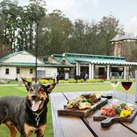 Dandenong Ranges Doggy Winery Tour