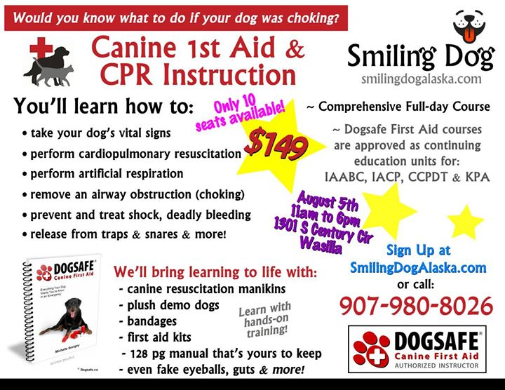 Dogsafe Canine 1st Aid Cpr Instruction Certification At Wasilla