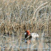 30th Anniversary Wetland Conservation Dinner &amp Charity Auction