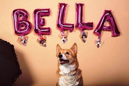 Help Fund Bellas Cart - Pet Session Weekend