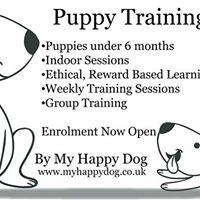 Puppy Training - Improvers