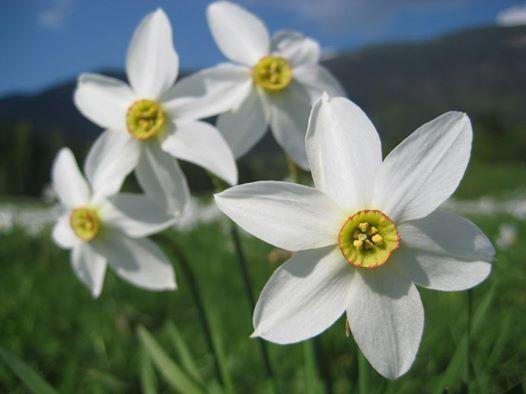 Poiana Narciselor - Mnstirea inca Veche - Moara cu ap Ohaba