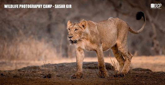 Wildlife Photography Camp - Sasan Gir May 2019