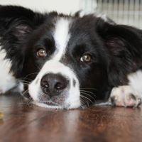 Workshop  De hond als jouw spiegel