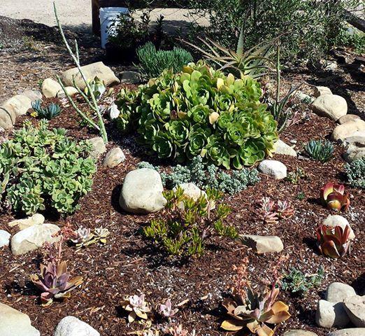 Creating A Rock Succulent Garden At Oxnard Historic Farm Park Museum