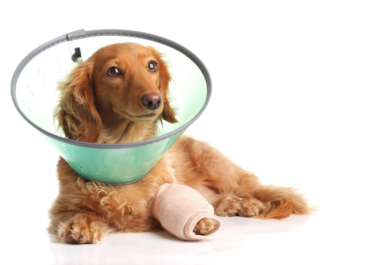 RVC First Aid Day for Dog and Cat Owners