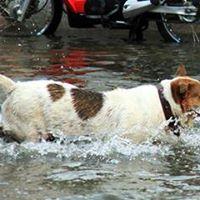 Emergency Preparedness For Animal Practices Exclusive Event