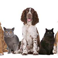 PET First Aid Course - Inglewood Taranaki