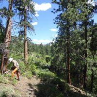 Boulder Creek Russian Olive Removal - Sawyer Project at Kolb