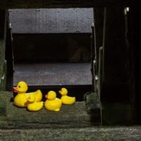May half-term duck race registration