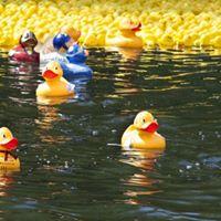 Million Dollar Duck Race
