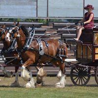 Williamstown Fair Light and Heavy Horse Show