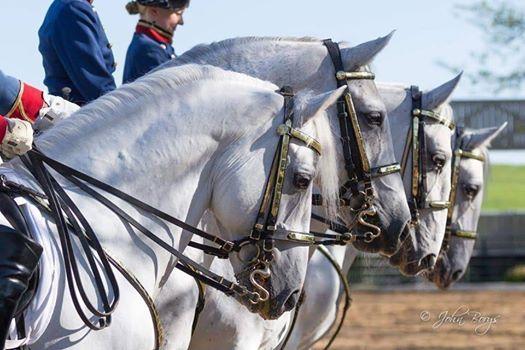 Lipizzan Stallion Show & Car Tour