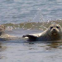 Kildonan Seals &amp Shore