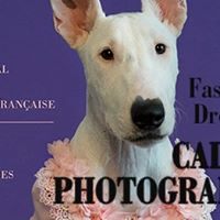 Concours photo de lAlliance Franaise