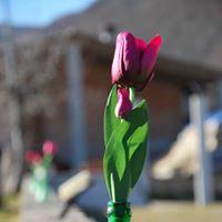 Le Voci dello Stupore - la Poesia dei Predolescenti