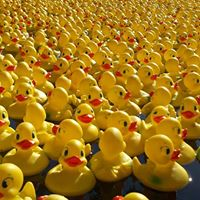 Kiwanis Of Glens Falls - 27th Annual Duck Race &amp Family Fun Day