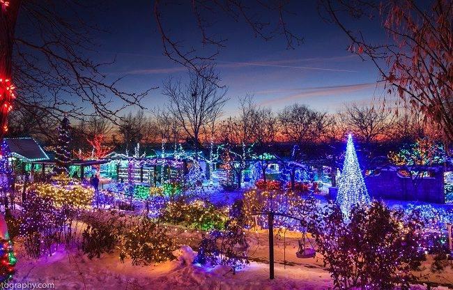 winter garden aglow here comes santa claus - Idaho Botanical Garden