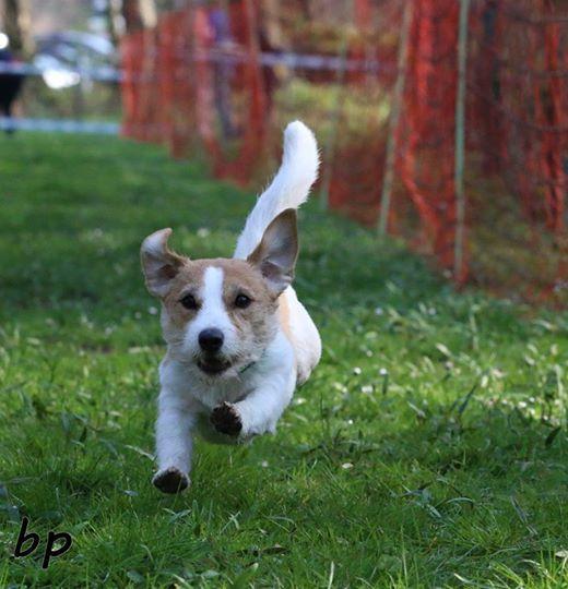 Hunderennen Wilde Sprints auf 4 Pfoten