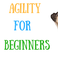 AGILITY FOR BEGINNERS Saturday DSPCA