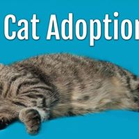 Petsmart Cat Adoption Langley