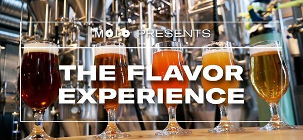 The Flavor Experience - Beer & Cheese