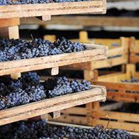 La Giaretta Valpolicella Wine Tasting