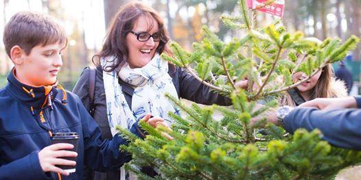 Real Christmas Tree Sales at Moors Valley - Real Christmas Tree Sales At Moors Valley Ringwood