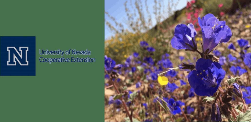 Surviving The Summer! With Master Gardener, Dr. Judith Kafantaris