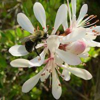 12717 Field Trip- Tosohatchee Wildlife Management Area
