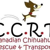 Paint Your Pet Portrait event in support of Canadian Chihuahua R