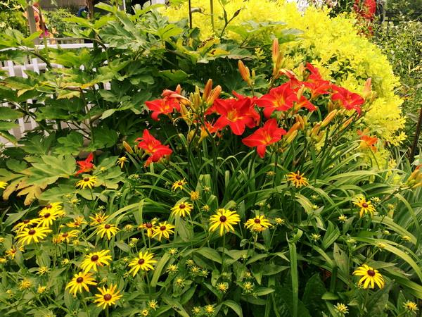 Beautiful Perennials For Iowa Gardens