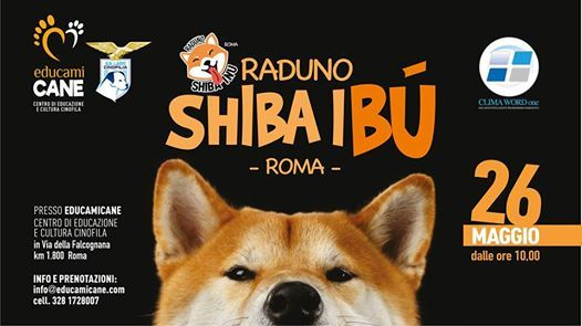 Raduno Shiba Inu Roma 26 Maggio 2019