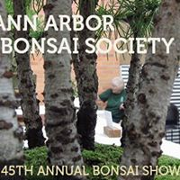 Ann Arbor Bonsai Society Show &amp Sale