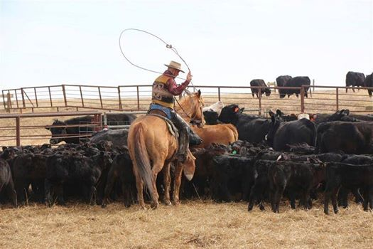Wolves and Ranching - Realities Challenges and Hope