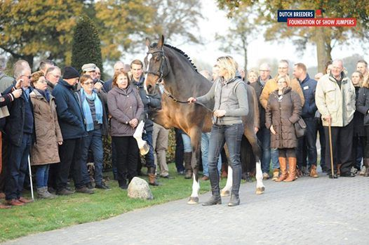 Dutch Breeders Foundation of Show jumpers goes Dublin Horse Show