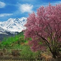 5 Day Trip to Hunza Valley