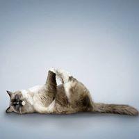 Find freedom in your hips Restorative Yoga Workshop